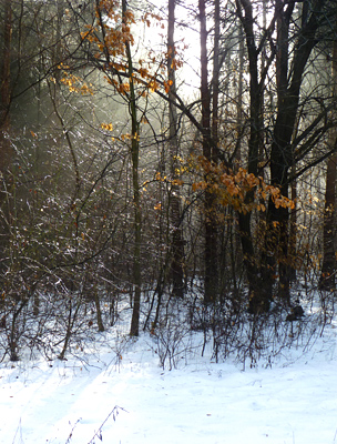 Salgóbánya télen