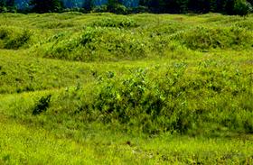 Földönkívüliek építették a hólyagos dombokat? A rejtélyes Mima Mounds