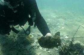 Horvátországi víz alatti város