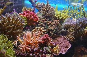 Nagy-korallzátony pusztulása