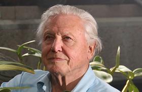 David Attenborough új műsorok BBC