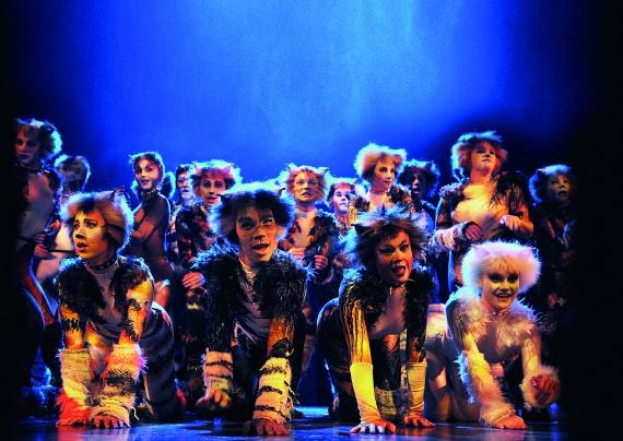 T. S. Eliot irodalmi Nobel-díjas költő Macskák könyve és Andrew Lloyd Webber fantasztikus, élő zenekarral előadott zenéjéhez adaptálódik a rendező Trevor Nunn, Gillian Lynne koreográfus és a díszlet és jelmeztervező John Napier mágikus színpadi alkotása.