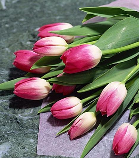Tulipán  A tulipán ősi szimbólum, a magyar népművészetben főként a szerelemmel került összefüggésbe. Kislány kortól egészen az öregségig képes ábrázolni a nőt.