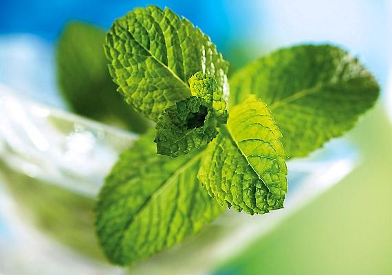 A menta nemcsak elnyomja a szagokat, de baktériumölő tulajdonsága révén elpusztítja a szájszagot előidéző anyagokat is.