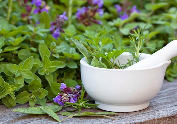 A zsálya antibakteriális hatásának köszönhetően csökkenti az ínygyulladást, megszüntetni a szájszagot.