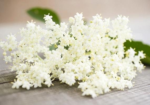 A bodzának - Sambucus nigra - kizárólag a virága és a bogyója fogyasztható megfázás és nátha esetén, teaként, a gyökere és a szára ugyanis mérgezést, gyomorpanaszokat okozhat. Tudj meg többet róla »