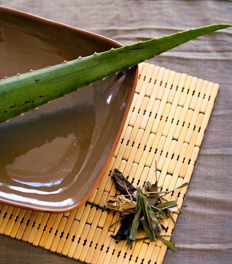 Aloe vera  Az aloe vera olyan hatékony természetes gyulladáscsökkentő, mely nem jár semmilyen mellékhatással. A növényt önmagában is használhatod kisebb felületi bőrsérülések kezelésére. Tarts otthon aloe verát, szükség esetén egyszerűen vágd le a növény levelét, préseld ki belőle a gél állagú anyagot, majd óvatosan kend a sérült bőrfelületre.  Kapcsolódó cikk: Candida-ellenes, antioxidáns, gyulladáscsökkentő »