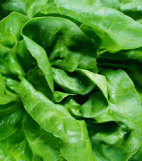 Saláta  Moss meg egy egész salátát, szedd leveleire, rakd forrásban lévő vízbe, majd főzd öt percig. Szűrd le a lehűtött folyadékot, hagyd kihűlni, majd ehhez keverj hozzá kukoricalisztet.  Kapcsolódó cikk: Így válaszd ki a megfelelő naptejet »