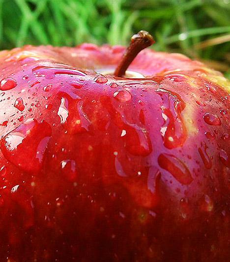 Alma  Kiváló salaktalanító hatásának köszönhetően az alma segítségedre lehet a méregtelenítésben. Fogyassz reggel és este egy-egy szemet. Ha méregtelenítő kúrádat az almára alapozod, két hét alatt akár öt kilótól is megszabadulhatsz.  Kapcsolódó cikk: Adj le 5 kilót az alma erejével! »