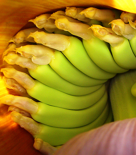 Banán  Magas B-vitamin tartalmának köszönhetően nyugtató hatású, és megóvja az idegrendszer egészségét, fogyasztása továbbá a szellemi teljesítmény szinten tartásához is elengedhetetlen. Magnézium- és káliumtartalma miatt a vérnyomást is szabályozza.  Kapcsolódó cikk: 3 egészségügyi érv a banánfogyasztás mellett »