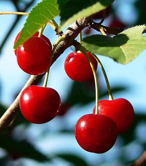 Meggy A savanykás piros gyümölcs színét a benne található antocianinnak köszönheti. Ám ez a fontos antioxidáns vegyület ennél jóval többre képes. Kiváló vértisztító, agyserkentő valamint gyulladáscsökkentő hatással bír.