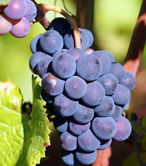 Szőlő Nemcsak a szabad gyökök ellen véd, hanem hatásosan szabályozza a vér koleszterinszintjét is. A benne található pektin képes magához ragadni a vérben felhalmozódó koleszterin-felesleget.  Kapcsolódó cikk: Intenzív salaktalanítás szőlővel »