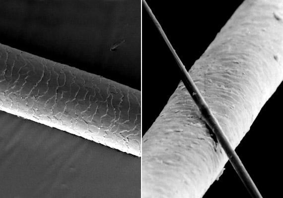 Ha pedig már megnézted a hajhagymát, íme, egy hajszál sokszoros nagyításban. A jobb oldali fotón egy 6 μm átmerőjű karbonszálat is láthatsz, hogy legyen mihez viszonyítanod. Egy átlagos emberi hajszál átmérője 70 µm.