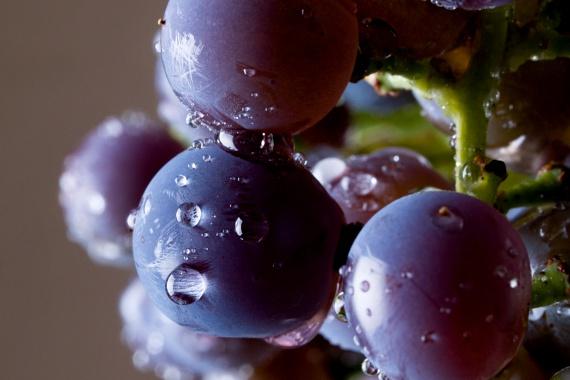 A szőlő is kitűnő K-vitamin-, mangán-, kálium-, B1-, B6- és C-vitamin-forrás, emellett olyan fontos növényi hatóanyagokat tartalmaz, mint a polifenolok és a resveratrol. Feltehetően mindkettő csökkenti a szív- és érrendszeri betegségek kialakulásának kockázatát, többek között a vérrögképződés megakadályozása révén. A szőlő fogyasztása továbbá kutatások szerint a szellemi képességekre is pozitív hatással van, javítja a tanulási, valamint a szóbeli és térbeli emlékezőkészséget, és a memóriaromlást is megakadályozhatja.