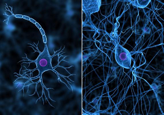 A bal oldali képen egy neuront - idegsejtet - láthatsz: a rövidebb nyúlványait dentritnek, a hosszabb, vastagabbat axonnak hívják. A jobb oldali fotó azt szemlélteti, hogy az idegrendszernek ezek a legkisebb egységei hogyan kapcsolódnak össze, és alkotnak bonyolult hálózatot - az információ továbbításának érdekében.