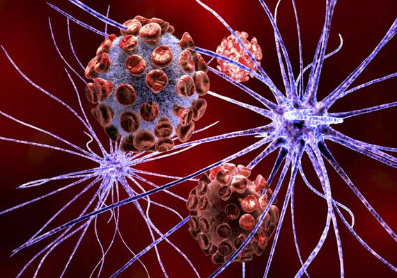 A fenti képen az idegsejteket támadó baktériumokat, vírusokat láthatsz. Ilyen kórokozó lehet például a veszettség - Rabies lyssa - vírusa.