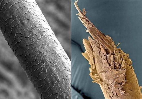 A bal oldali képen egy egészséges, míg a jobb oldalin egy töredező hajszálat láthatsz. Utóbbi egészen úgy fest, mint egy törött fadarab.