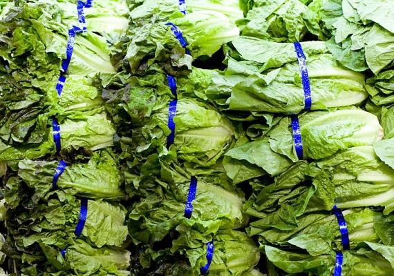 A friss zöldségek, például a saláta veszélyes forrása lehet az E-coli baktériumoknak, ám a fertőzésért elsősorban a szennyezett ivóvíz felel. A betegség hasmenéssel, hasi görcsökkel, gyengeséggel, magas lázzal és hányással jár. Tudj meg róla többet!
