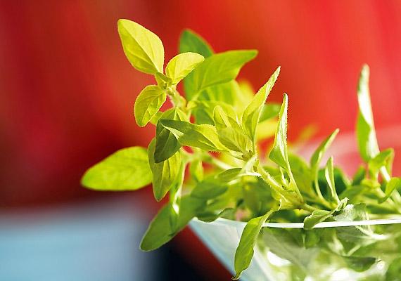 A kellemes aromájú oregánó amellett, hogy gombaölő hatású, a lúgosító étrendbe is remekül beleilleszkedik.
