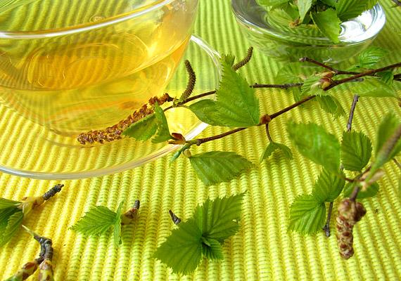 A közönséges nyírnek - Betula pendula - elsősorban a levelét használják gyógyászati célokra. Egy-két teáskanálnyi szárított levélből főzz teát - vesetisztító, vízhajtó hatásának köszönhetően csillapítja a felfázás tüneteit.