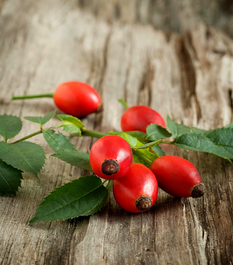 CsipkebogyóA csipkebogyó tulajdonképpen a vadrózsa - Rosa canina - termése, a rózsabokrokon található, miután a rózsák elvirágzottak. C-vitamin-tartalma jelentős: 100 gramm csipkebogyóban fajtától függően több mint 200 mg van az immunerősítő vegyületből. A meleg csipkebogyótea ezért hatékony természetes gyógymód lehet megfázás esetén.Kapcsolódó cikk:Csipkebogyótea: így készítsd el szakszerűen influenza ellen »