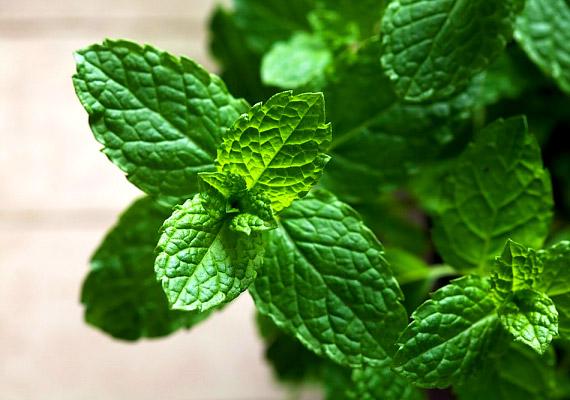 A citromfűben lévő illóolaj vírusölő, antibakteriális és természetes gyulladáscsökkentő hatással bír. Tégy két teáskanálnyi citromfüvet egy csészébe, majd forrázd le. Fogyaszd az így elkészült teát naponta többször, a leforrázott levelekkel pedig borogathatod a herpeszt. Tudj meg többet a növényről!