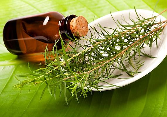 A teafaolaj nemcsak a gombák, hanem a vírusok ellen is hatékony természetes gyógymód. 1:1 arányban keverj össze teafaolajat olívaolajjal, majd naponta több alkalommal ecseteld vele a herpeszt. Még több infó a teafaolajról!