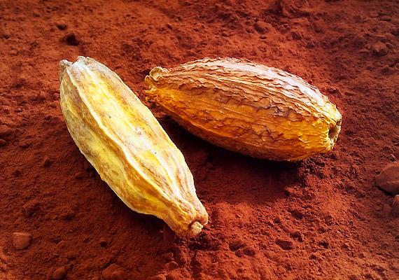 A jó minőségű kakaópor nélkülözhetetlen eleme a bázikus étrendnek.