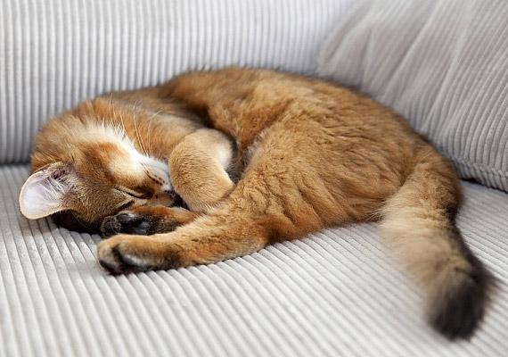 Sajnos az sem kizárt, hogy kedvenc cicád áll az allergia hátterében. A macskák egyfelől szőrükkel - illetve az úgynevezett korpával, mely az állat szőréről lehulló por -, nyálukkal és vizeletükkel is kiválthatnak allergiás reakciót.