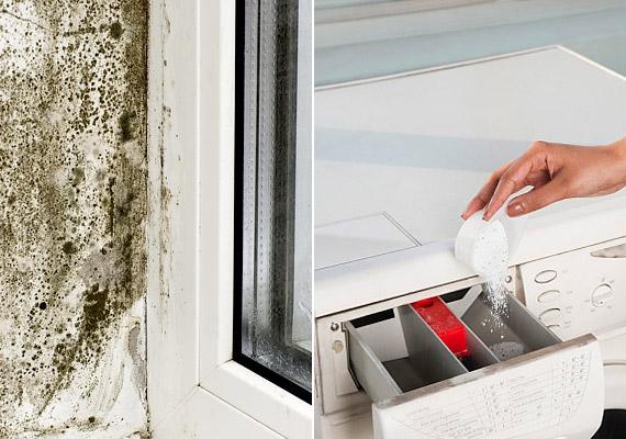 A penész az egyik leggyakoribb beltéri allergén. A penészgombák előszeretettel szaporodnak párás, meleg helyeken: kedvelik az fürdőszobát, a háztartási eszközöket, a gyakran öntözött szobanövények talaját, az ablak körüli tereket. Tudd meg, hogyan szabadulhatsz meg tőle!