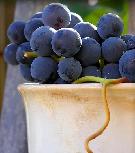 Szőlő  Az ősz legkedvesebb gyümölcse enyhén lúgosító hatású, a belőle készült mazsola azonban igen hatásosan veszi fel a harcot a túlzott elsavasodás ellen.  Kapcsolódó cikk: A 10 legfinomabb lúgosító táplálék »