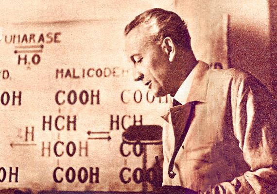 Ha világhírű magyar találmányról van szó, valószínűleg neked is Szent-Györgyi Albert és a C-vitamin jut eszedbe. A tudós 1932-ben azonosította a hexuronsavat a C-vitaminnal - más néven aszkorbinsavval. A létfontosságú immunerősítő vitamint először paprikából sikerült kivonnia. Szent-Györgyi 1937-es élettani-orvosi Nobel-díjat kapott.