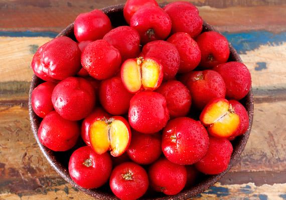 Az acerolával leginkább a természetes növényi hatóanyag-tartalommal büszkélkedő C-vitamin-készítményekben találkozhatsz. A friss - hazánkban sajnos kevés helyen kapható - gyümölcs 100 grammjában akár 1600 milligramm C-vitamin is lehet. A növény ezen kívül kiváló kálium-, magnézium- és A-vitamin-forrás.