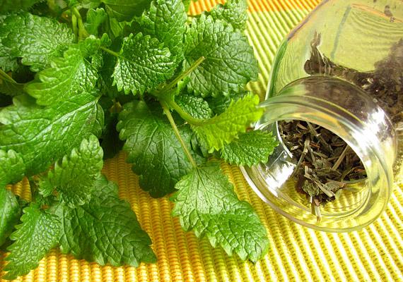 Mielőtt gyógyszeres készítményekhez fordulnál, érdemes bevetned a gyógynövények erejét, például teák formájában. A citromfűtea stresszcsökkentő, nyugtató és elalvást elősegítő hatásairól is ismert, így lefekvés előtt érdemes belőle innod egy csészével, lassan kortyolgatva. Többet is megtudhatsz róla, ha ide kattintasz!