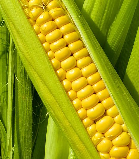 Magas keményítőtartalom - kukorica  Egyesek számára nehezen emészthető a búza, a zab vagy a kukorica. Ennek oka a magas keményítőtartalom. Amikor ezek a táplálékok a vastagbélbe kerülnek, megindul a fokozott gázképződés. A rizs az egyetlen olyan keményítőt tartalmazó étel, mely nem okoz ilyen panaszokat.  Kapcsolódó cikk: Rákellenes, emésztésserkentő, agypörgető - Mi az? »
