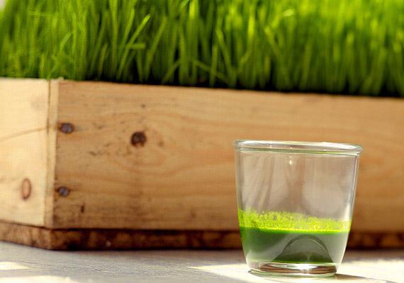 A búzafűlében A-, B,- E-, F- és K-vitamin is található, segíti a sejtek regenerálódását, antioxidáns hatású. Jót tesz az emésztésnek, segít visszaállítani a hasznos baktériumok egyensúlyát a belekben - ami nélkülözhetetlen az immunrendszer hibátlan működéséhez. Korábbi cikkünkben írunk róla, hogyan készíthetsz otthon búzafűlevet!