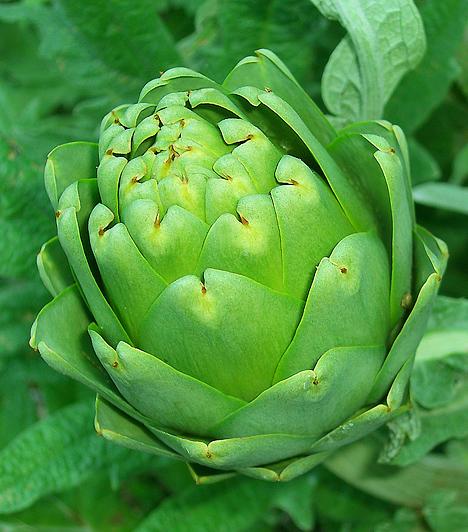 Articsóka A cinarin nevű szerves sav, mely a növényben található, antioxidáns tulajdonsága révén bizonyos fokú védelmet nyújt a környezeti méreganyagok káros hatásaival szemben. Emiatt pedig a zöldség hasznos lehet a rákmegelőzésben.