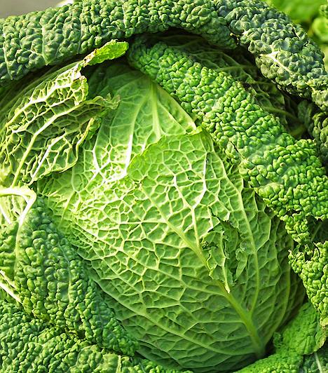 Káposzta  A zöldség telis-tele van értékes ásványi anyagokkal, és jelentős béta-karotin-tartalma révén serkenti az immunrendszer működését, így rákmegelőző hatású.  Kapcsolódó cikk: Ezeket edd a rák ellen októberben! »