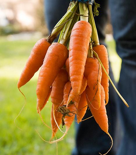 Sárgarépa Ropogós, élelmi rostban gazdag élelmiszer például a sárgarépa, a brokkoli, illetve a zeller. Fogyasztásukkal tisztíthatod a fogaidat és jót teszel az egészségeddel!  Kapcsolódó cikk: Az 5 leghatásosabb módszer szájszag ellen »