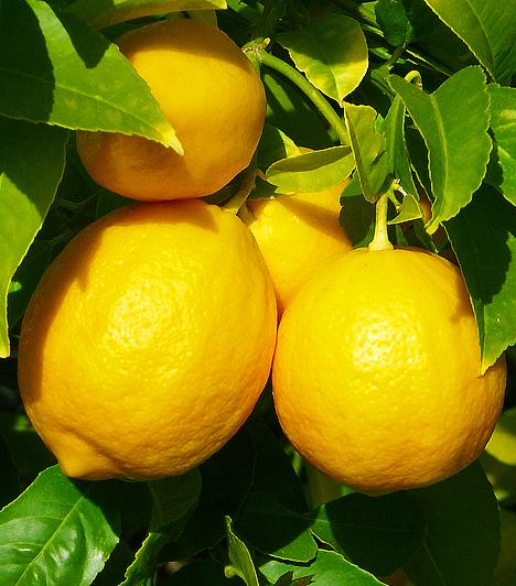 CitromEgy frissen facsart citrom levét add hozzá egy pohár langyos vízhez. Az italt ízesítheted mézzel is, majd fogyassz belőle minden étkezés után legalább néhány kortyot. Serkenti a gyomorsav képződését és az emésztőrendszer izmainak működését is.Kapcsolódó cikk:Székrekedés, akné és influenza ellen - Évezredes csodaszer »