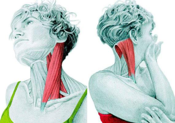 A nyak oldalsó megnyújtása - 1. kép: hajtsd oldalra a fejed, miközben felfelé nyomod az állad. Figyelj rá, hogy a gerinced közben ne húzódjon, ne hátból, hanem nyakból mozogj. Ha ülve csinálod, és az ülő rész aljába kapaszkodsz, könnyebb lesz. 2. kép: a képen is látható módon, az egyik kezeddel told oldalra az arcodat, míg a másikkal a felkarodat alulról támasztod. A mélyizmok megnyújtása érdekében ezzel enyhén megtolhatod az arcodat tartó karodat. Az állad kissé emeld ki.