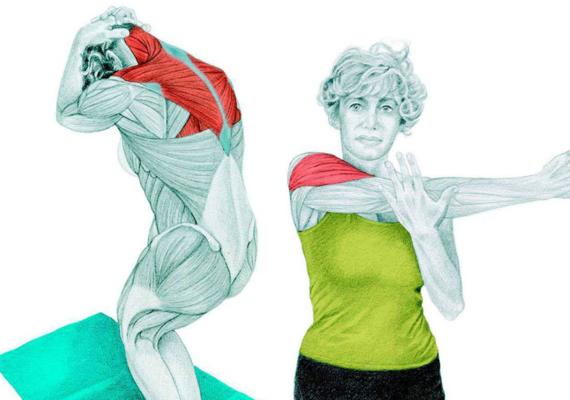 A lapocka és a váll megnyújtása - 1. kép: a trapézizmot nyújthatod meg ezzel a gyakorlattal. Állj összezárt, behajlított lábakkal. Ahogy a képen is látod, fogd meg hátul a fejed. Hajlítsd meg finoman a hátad, az álladdal érintsd meg a mellkasod, majd egyenesedj fel. 2. kép: A képen látható módon nyújtsd ki az egyik kezed az ellenkező oldalra a mellkasod előtt, a másikkal pedig fogd át, és told a könyöködnél. Fontos, hogy gerincből ne mozogj.