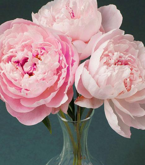 A bazsarózsa jó választásA bazsarózsa az egyik legerősebb szerelemvonzó virág. A feng-shuiban, mindenképp élő virágot, és ne selyemvirágot, tegyél a vázába, mert az maximum akkor használható a feng-shuiban, ha a megtévesztésig hasonlít az igazira. A feng-shuiban a bazsarózsa a románc és a női szépség jelképe, ezért jó szerelemvonzó. Mivel a bazsarózsa most egyébként is divatos vintage motívum, könnyen találhatsz ilyen mintázatú dísztárgyakat is a boltokban.