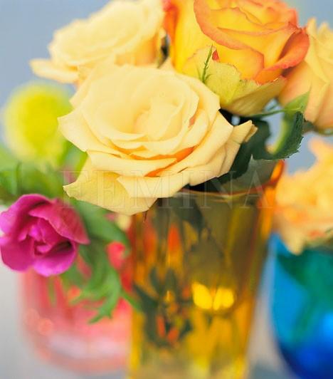 Ne tegyél rózsát a vázába!Bár az élő virágok mágnesként vonzzák a szerelmet az életedbe, a hiedelemmel ellentétben ez a rózsára nem igaz. Bár nyugaton a rózsa a szerelem virága, a feng shui kifejezetten negatívan ítéli meg a tüskéi miatt. Ha szereted a virágokat, és ezzel egyidőben párt is szeretnél, ne rózsacsokrot tegyél a vázádba! Válaszd inkább a bazsarózsát!