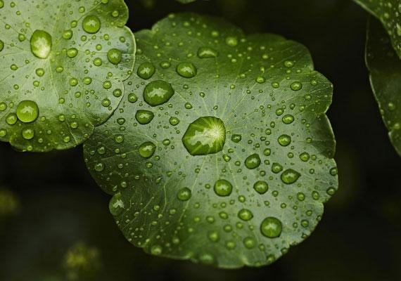 Ha esik az eső a nagy napon, a házasság sok könnyel jár majd.