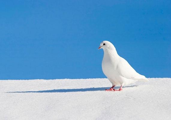 Ha fehér galambot látsz a házad közelében, biztos lehetsz benne, hogy esküvő vár rád a közeljövőben.
