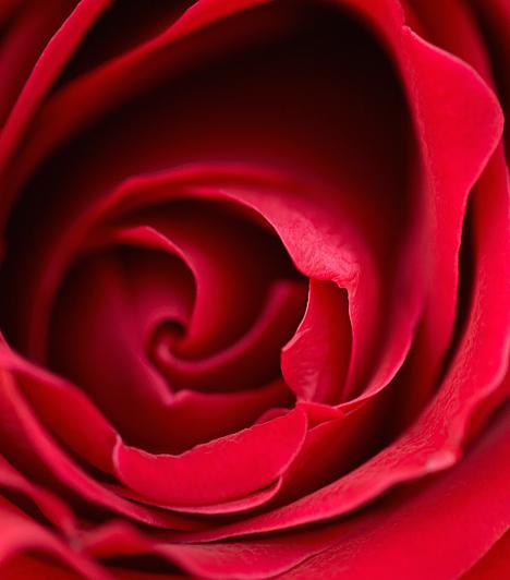 Rózsa  Állítólag a rózsa volt a kedvenc virága a szerelem istennőjének, Aphroditének, aki a római mitológiában már Vénuszként jelenik meg. Az ezotéria szerint ez a dekoratív és illatos növény bevonzza a szerelmet életedbe. Rózsaszín vagy piros színűt válassz. A legjobb, ha a lakás szerelemsarkában helyezed el, de otthonod más pontjain is kifejtheti jótékony hatását.  Kapcsolódó cikk: Szerelmi párhoroszkóp