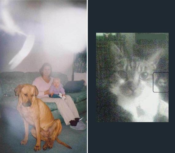 Mindkét fotó láttán frászt kaphatott a készítő: balra a kutya felett fehér színű köd, jobbra a macska mögött egy félelmetes arc rajzolódik ki. Kísértet, netán démon lehetett? A képet az arc élessége érdekében eredeti méretében hagytuk.