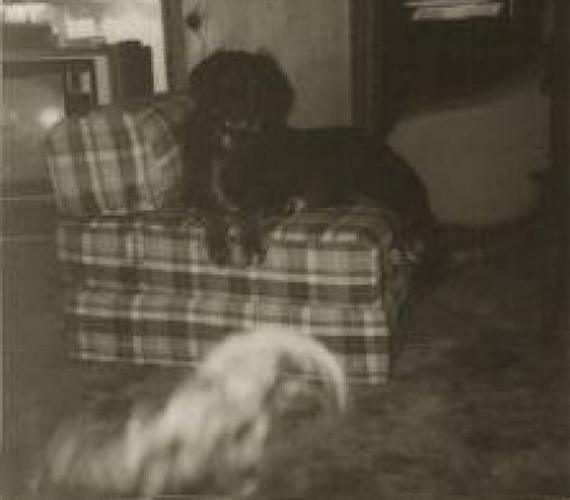 Ezen a régebbi képen is kísértet lehetett, méghozzá egy kutyáé. A kockás fotelban pihenő állatról idilli képet lehetett volna csinálni, ám a földön ülő másik, ködszerű kutyaformára bizonyára nem számított a kép készítője.