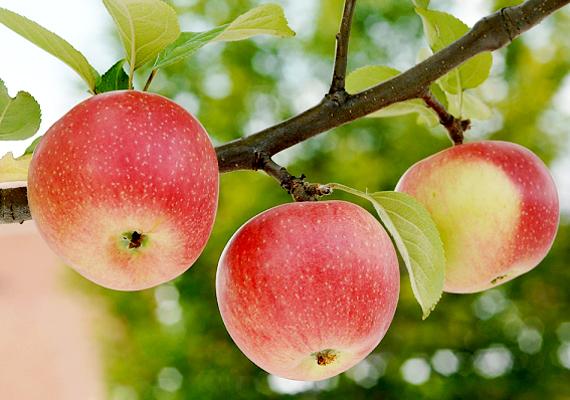 A bőven termő gyümölcsfák és a szüret az álomban szintén busás bevételt ígér: ha ezekkel álmodsz, nem valószínű, hogy lesznek a jövőben anyagi gondjaid.